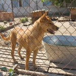 Dog animal shelter